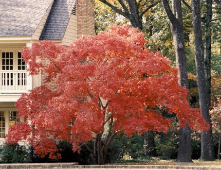 Pon linda tu casa jardines hermosos for Arboles ornamentales de jardin de hoja perenne