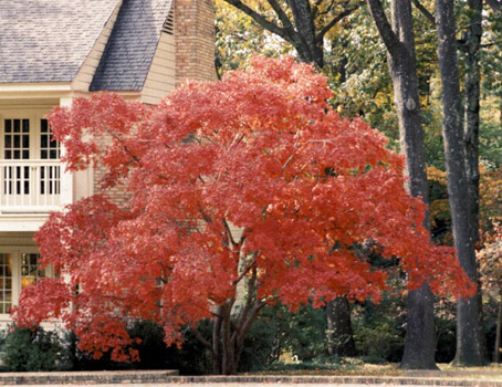 Pon linda tu casa jardines hermosos - Arboles ornamentales para jardin ...